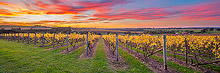 Vineyard Sunset Photos