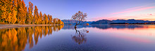 Wanaka Tree Autumn Sunrise