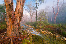Mount Buffalo Forest Fog Photos