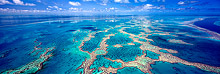 Great Barrier Reef Limited Edition Print