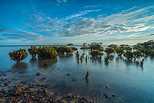 Phillip Island Photography Tours
